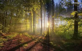 bosque y rayo de sol
